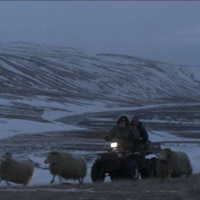 Islandzka opowiesc_4