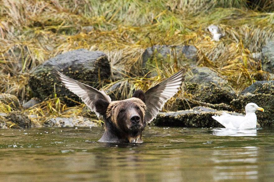Comedy Wildlife Photography Awards - tattwa